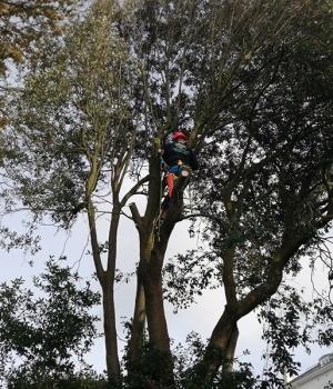 Tree surgery Torbay