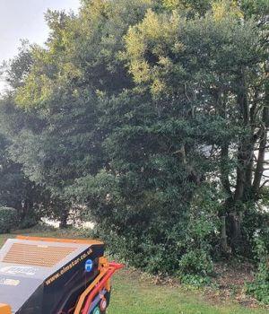 Stump Grinding Teignmouth