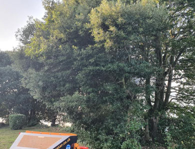 Tree Surgeons Teignbridge