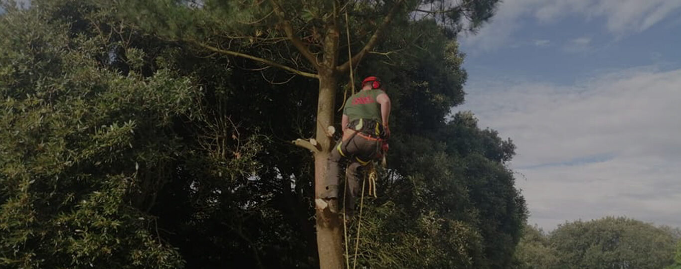 Tree Surgery Torquay