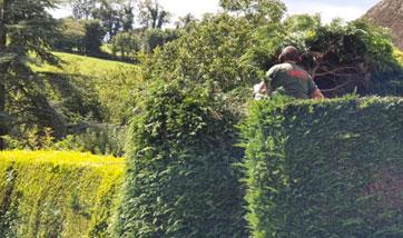 Tree Surgeons Teignmouth