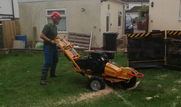 Stump Grinding Torquay