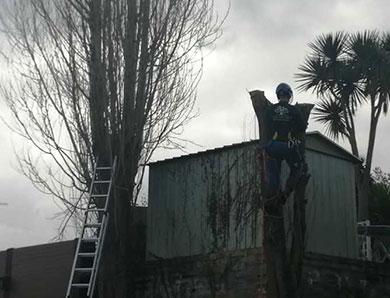 Tree Surgeons South Hams
