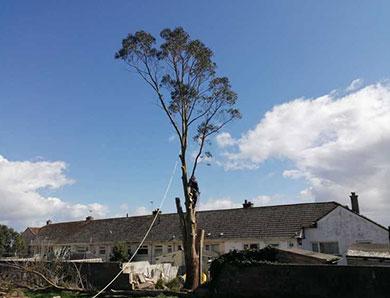 Tree Surgeons Torquay